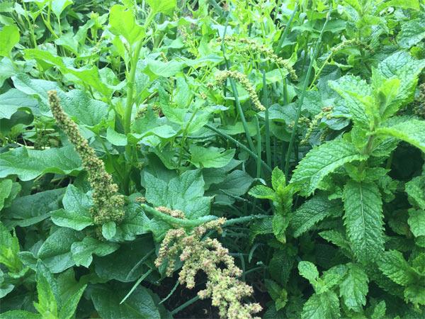 Why create a perennial food garden?